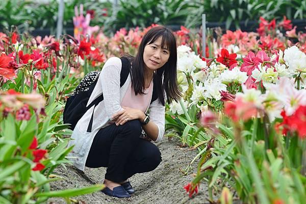 四湖長春孤挺花園 (14)