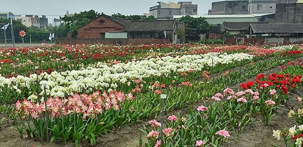 四湖長春孤挺花園 (33)