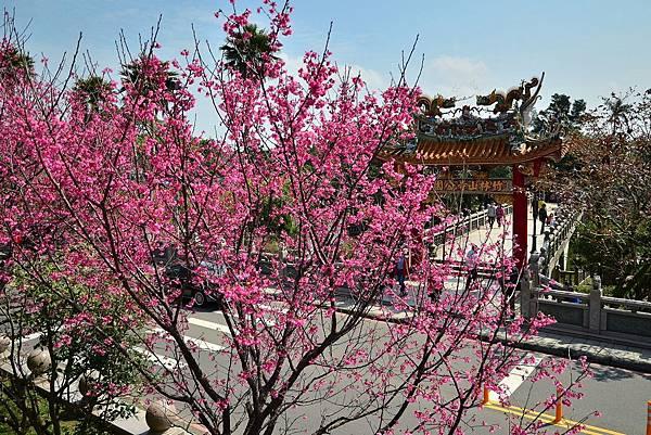 竹林觀音寺賞櫻 (2)