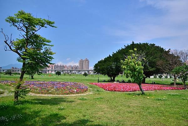 水漾公園花海 (1)