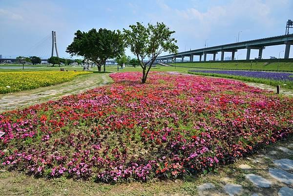 水漾公園花海 (23)