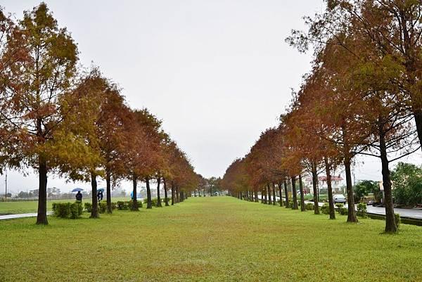 安農溪落雨松 (4)