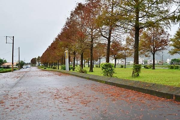安農溪落雨松 (8)