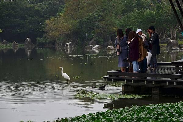 羅東運動公園落羽松  (12)