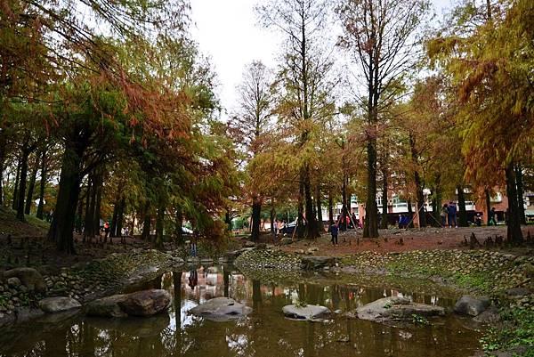 羅東運動公園落羽松  (15)