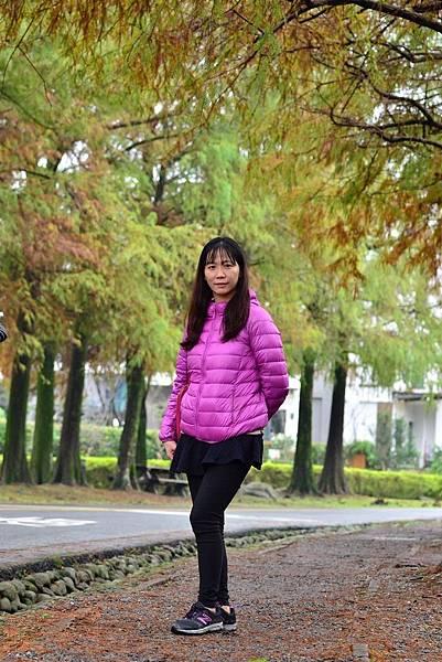 羅東運動公園落羽松  (17)