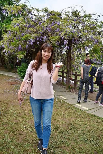大湖紀念公園紫藤 (3).jpg