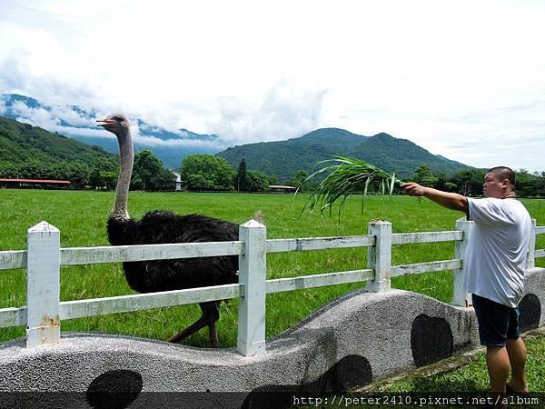 風吹草低見牛羊 (21).jpg