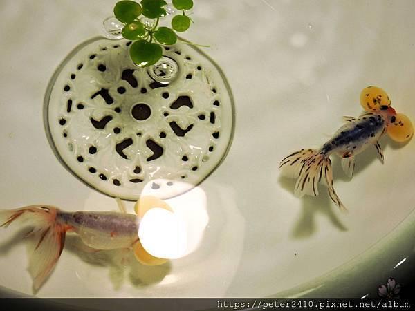 水泡金魚.jpg