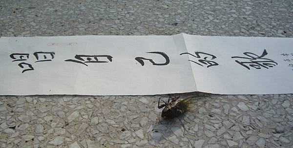 蔣勳字2007.8.3 (70)蟬.jpg