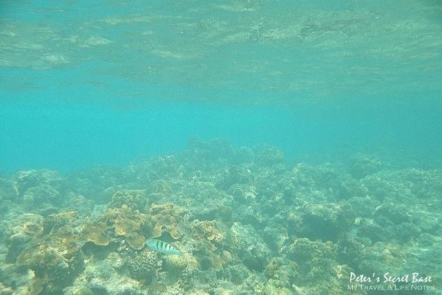 水中相機 (10)