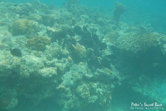水中相機 (12)