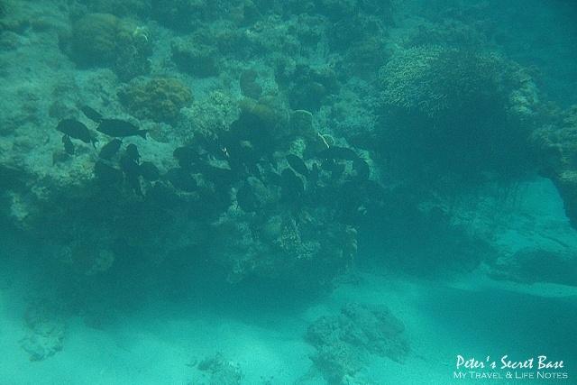 水中相機 (13)