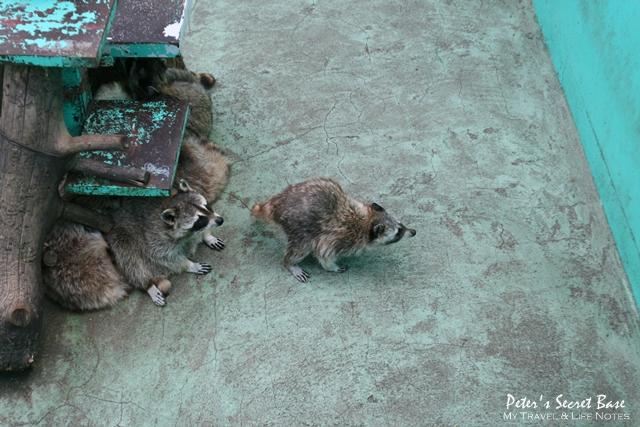 昭和新山與熊牧場 (7)