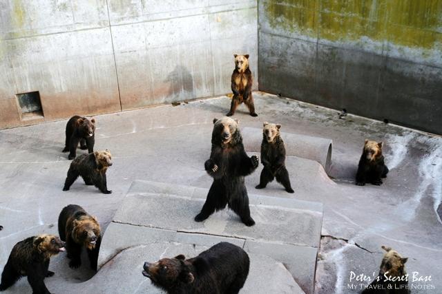 昭和新山與熊牧場 (13)