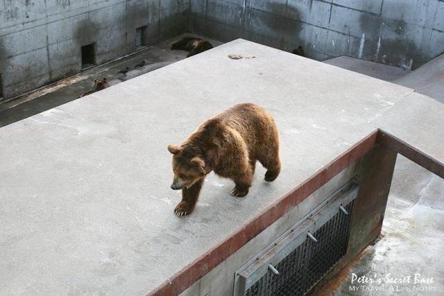 昭和新山與熊牧場 (16)