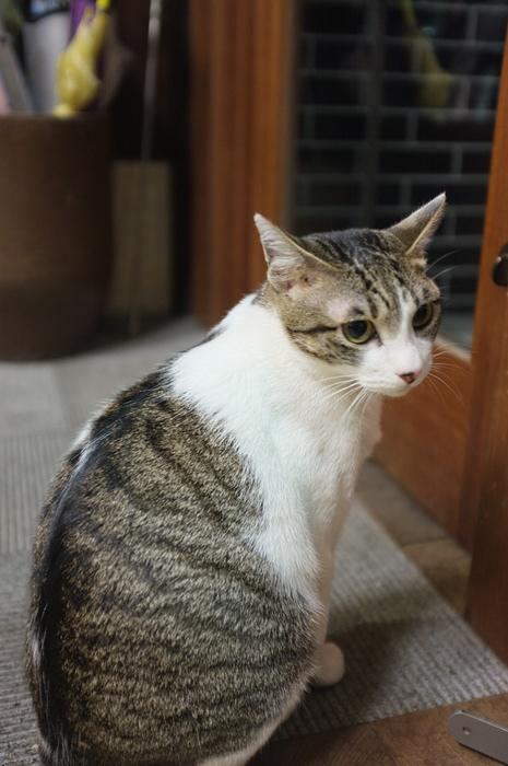 京都逃現鄉 (30).JPG