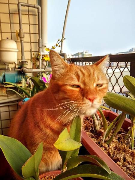 迎向朝陽的貓 (2).jpg