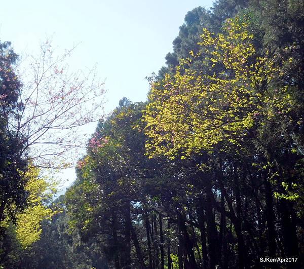 41-DSCN2011.JPG