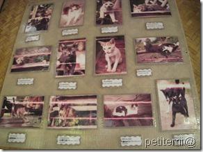 IMG_6121貓咪排行榜