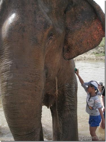 IMG_6182刷刷大象