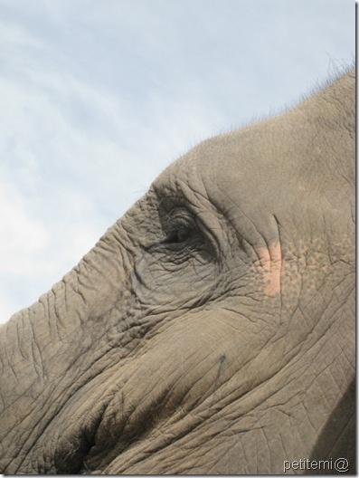 IMG_6307大象之眼