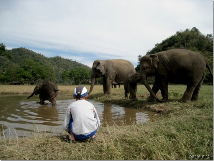 IMG_6303觀察大象