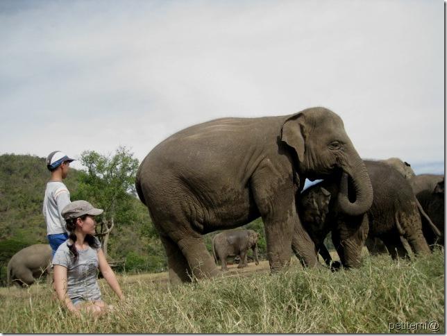 IMG_6300近距離觀察大象