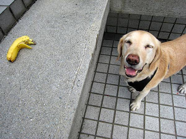 香蕉寶01.jpg