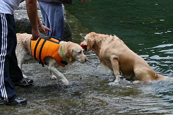 Ruby去游泳1.JPG