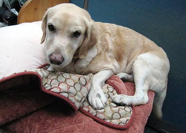 Ruby只想窩沙發上3.JPG