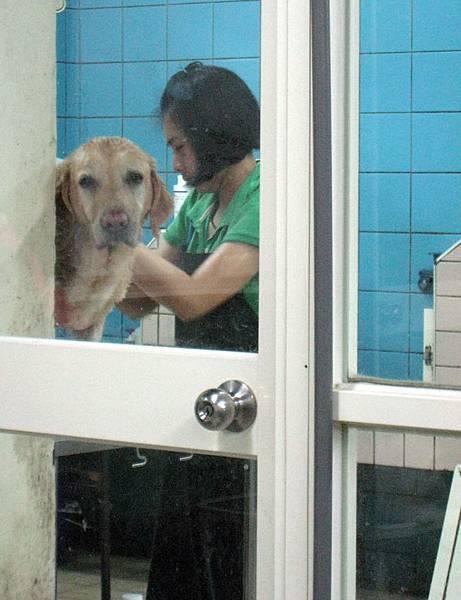 Ruby在TJ dog洗澡.JPG
