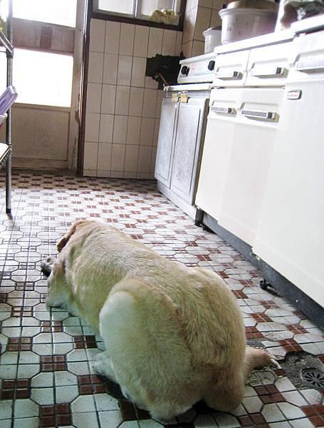 Ruby在廚房等阿嬤.JPG