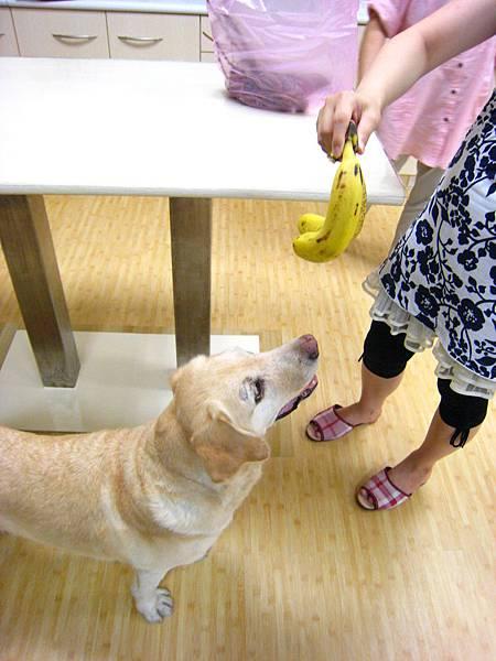 Ruby拍X光有香蕉吃.JPG