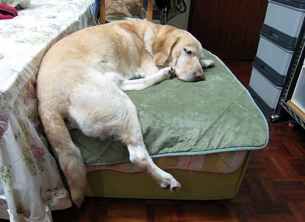 Ruby睡沙發.JPG