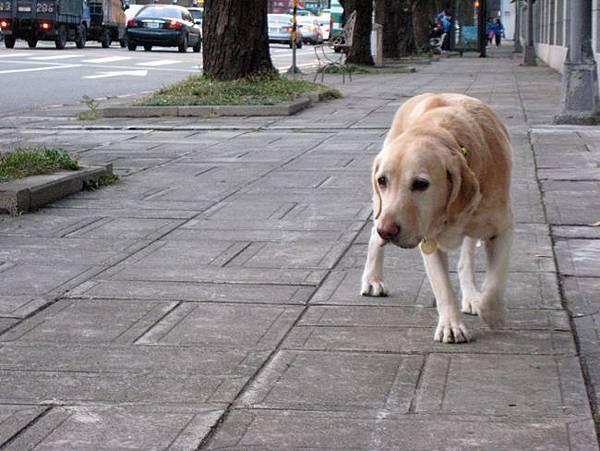 Ruby請你keep walking.JPG