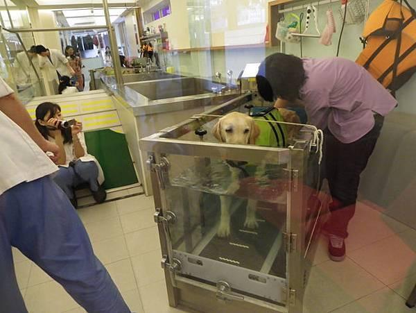 18林醫師幫大寶攝影記錄.jpg
