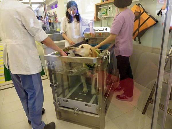 19二位醫生一位助理幫大寶水療.jpg