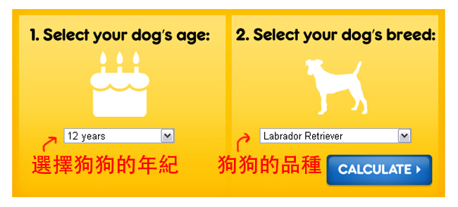 dog age2.jpg
