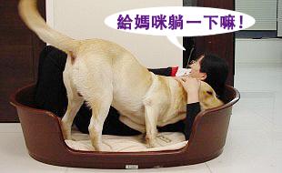 Ruby的寵物床床危機04.jpg