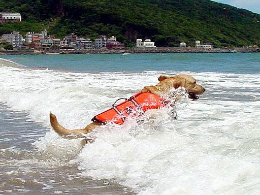 10英勇衝向海浪.jpg