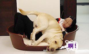 Ruby的寵物床床危機07.jpg