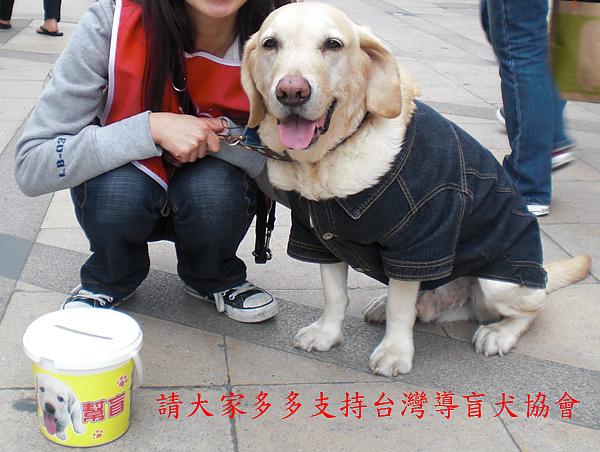 支持導盲犬.jpg