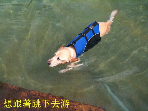 想跟著跳下去游.jpg