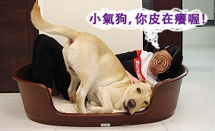 Ruby的寵物床床危機06.jpg
