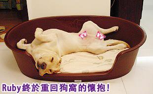 Ruby的寵物床床危機12.jpg