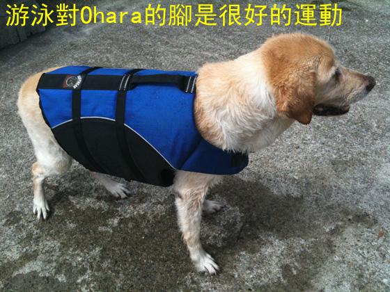 游泳對Ohara的腳是很好的運動.jpg