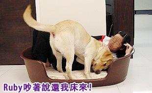 Ruby的寵物床床危機03.jpg
