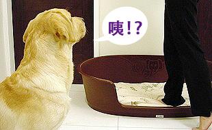 Ruby的寵物床床危機02.jpg