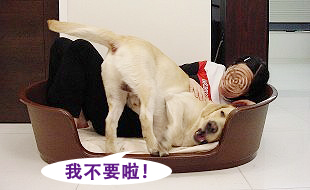 Ruby的寵物床床危機05.jpg